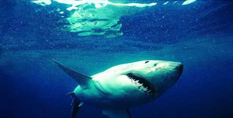实验人员讥笑它是海里最懦弱的鱼